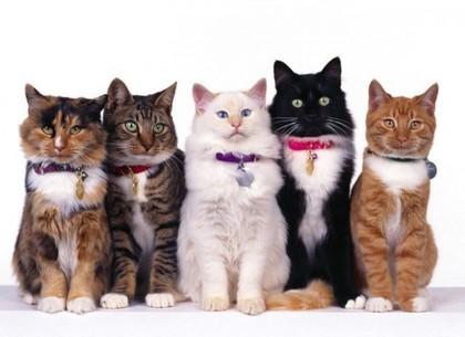 Картинка С днем кошек! Фото кошек открытки фото рисунки картинки поздравления