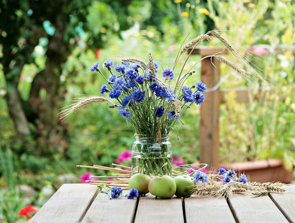 Wild_flowers_by_Arivederchi.jpg