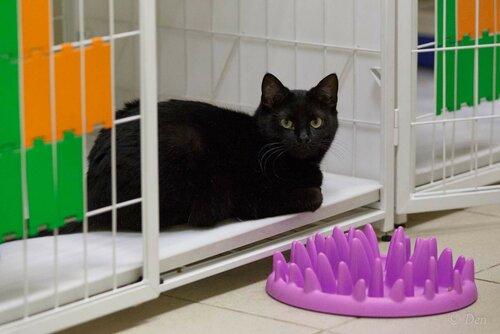 Марсель кот из приюта догпорт