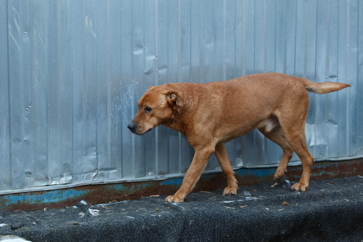 Барбос из приюта догпорт фото