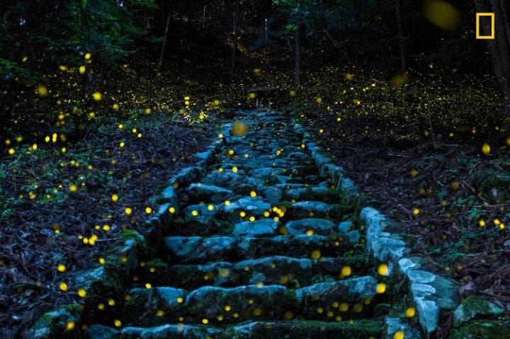 Категория «Природа», поощрительная премия — светлячки в отдаленной японской деревне. Фото: Yutaka Ta