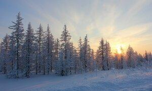Солнце прячется за лес...