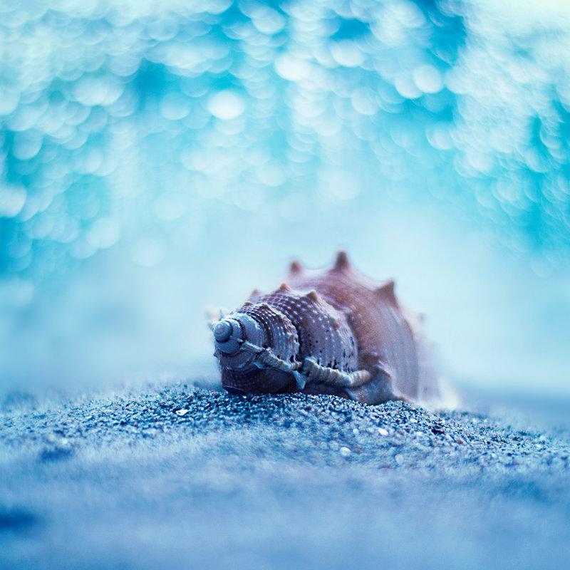 29 Beautiful Bokeh Photographs