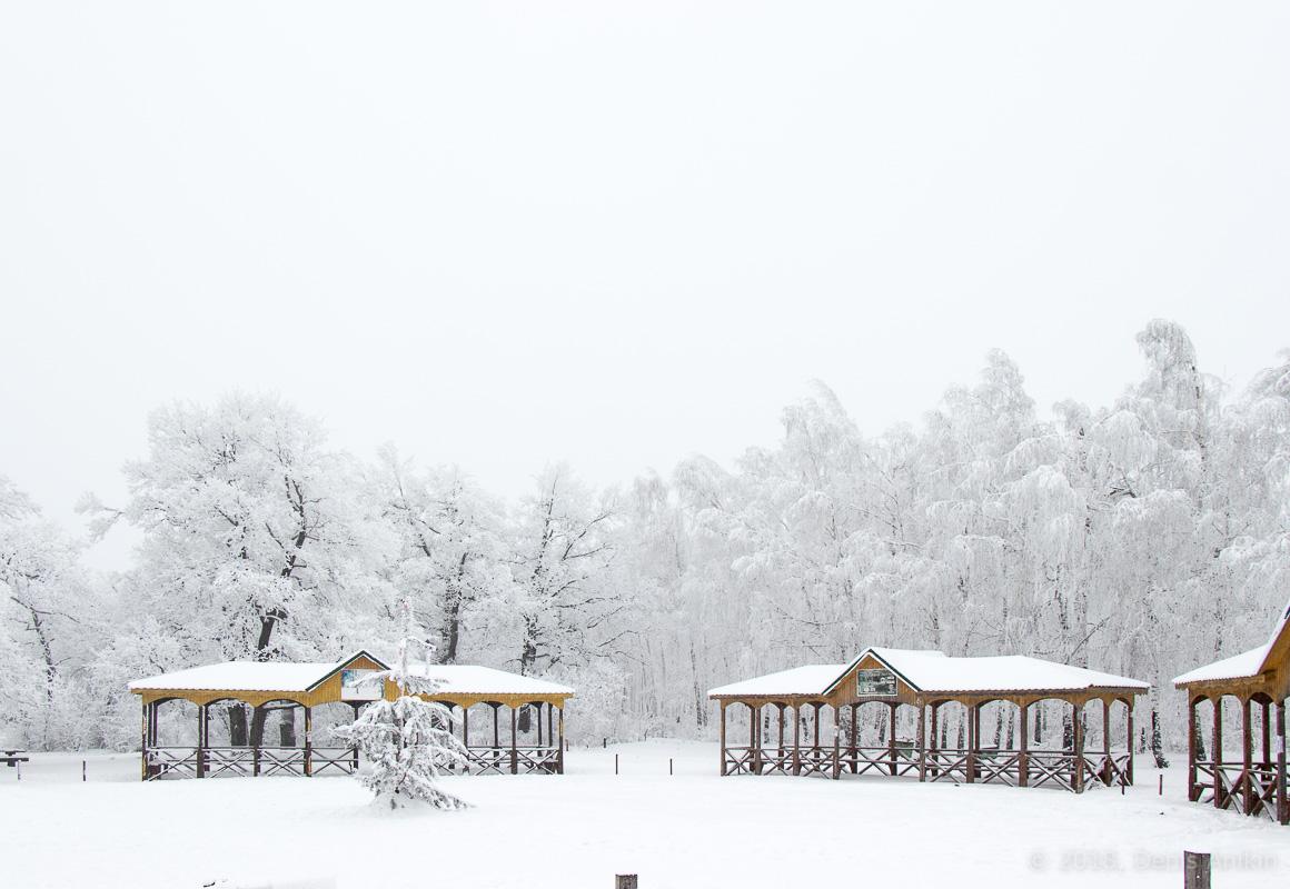 зима лес кумысная поляна фото 2