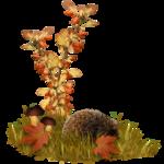 Осенний кластер