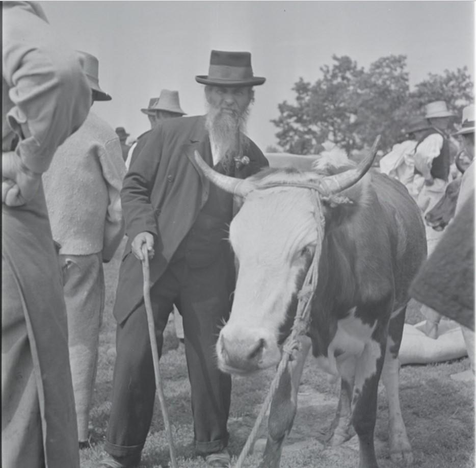 Торговец крупным рогатым скотом на рынке в Хусте