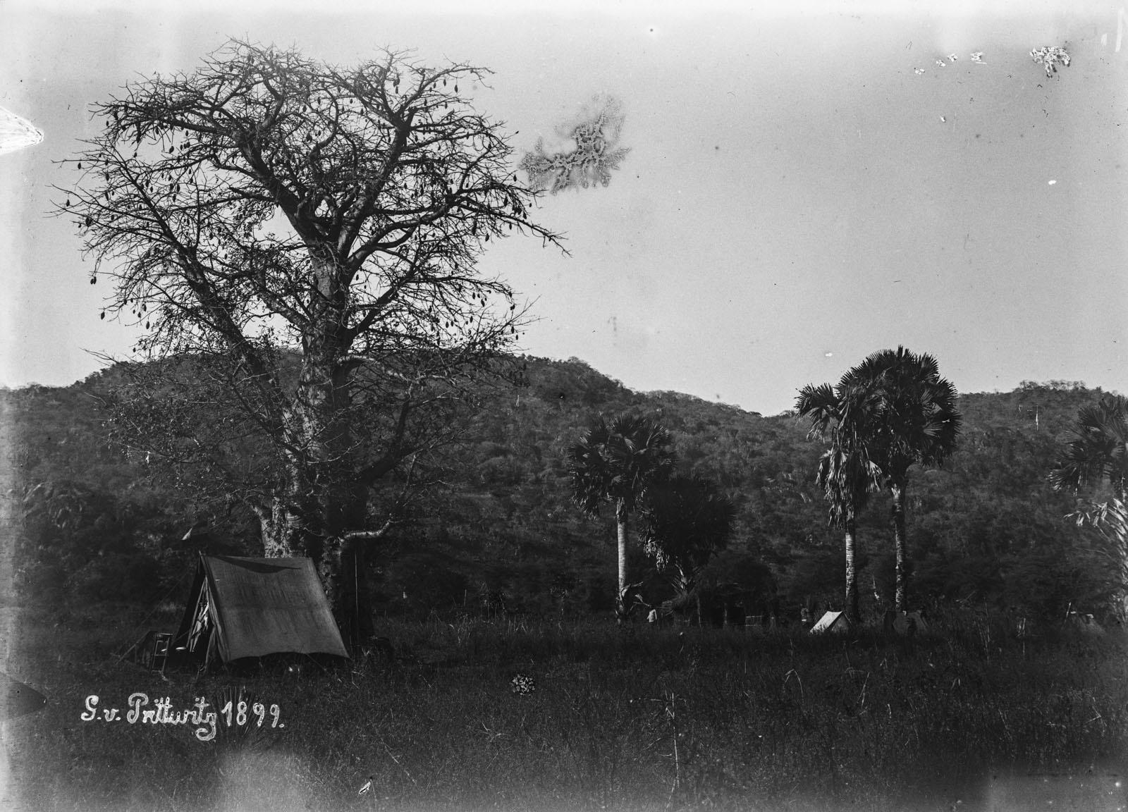 21. 1899. Палаточный лагерь под деревьями
