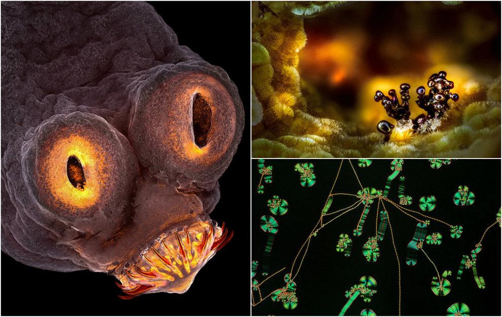 Лучшие работы конкурса микрофотографии Nikon Small World 2017