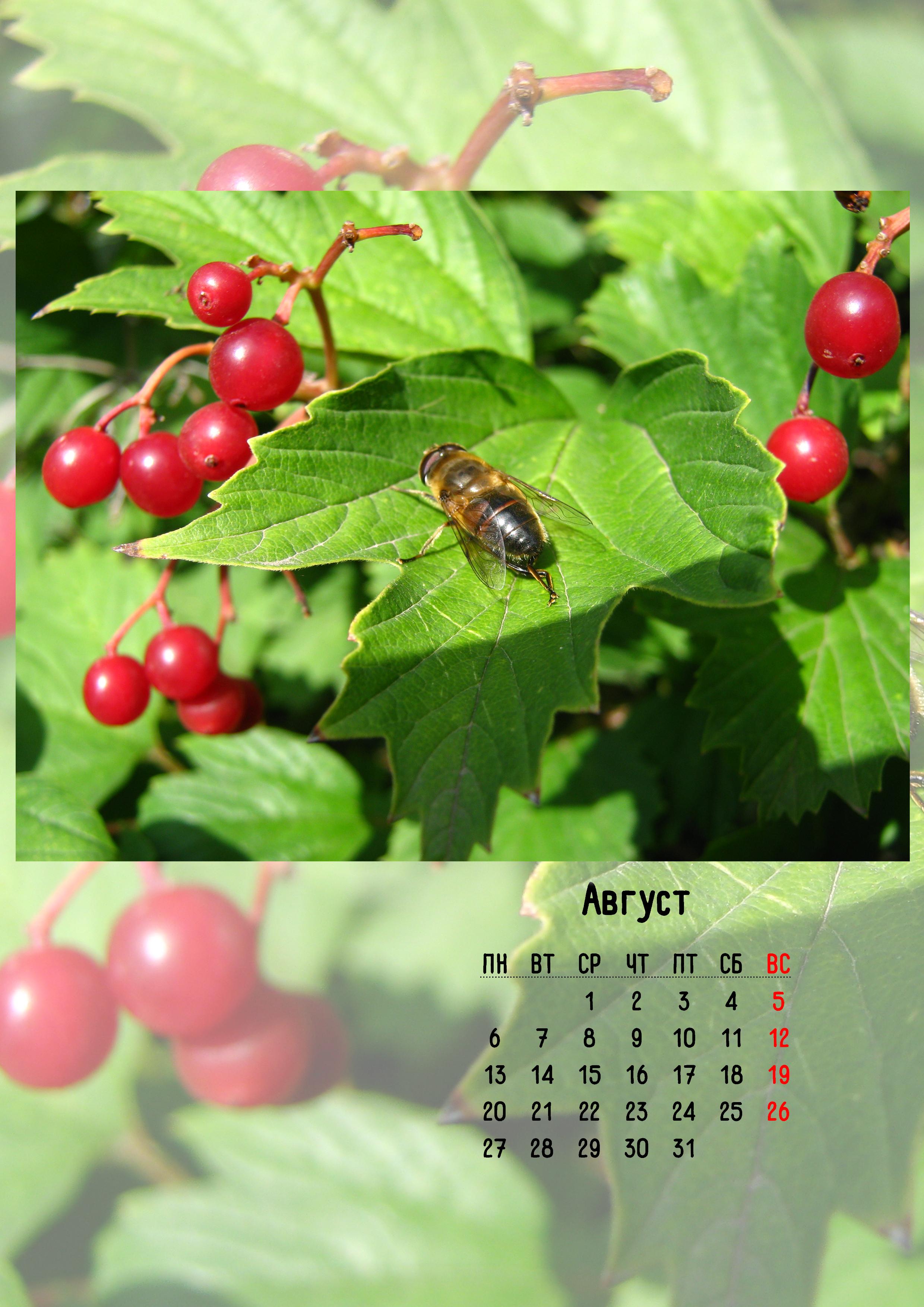 9. Календарь август.jpg