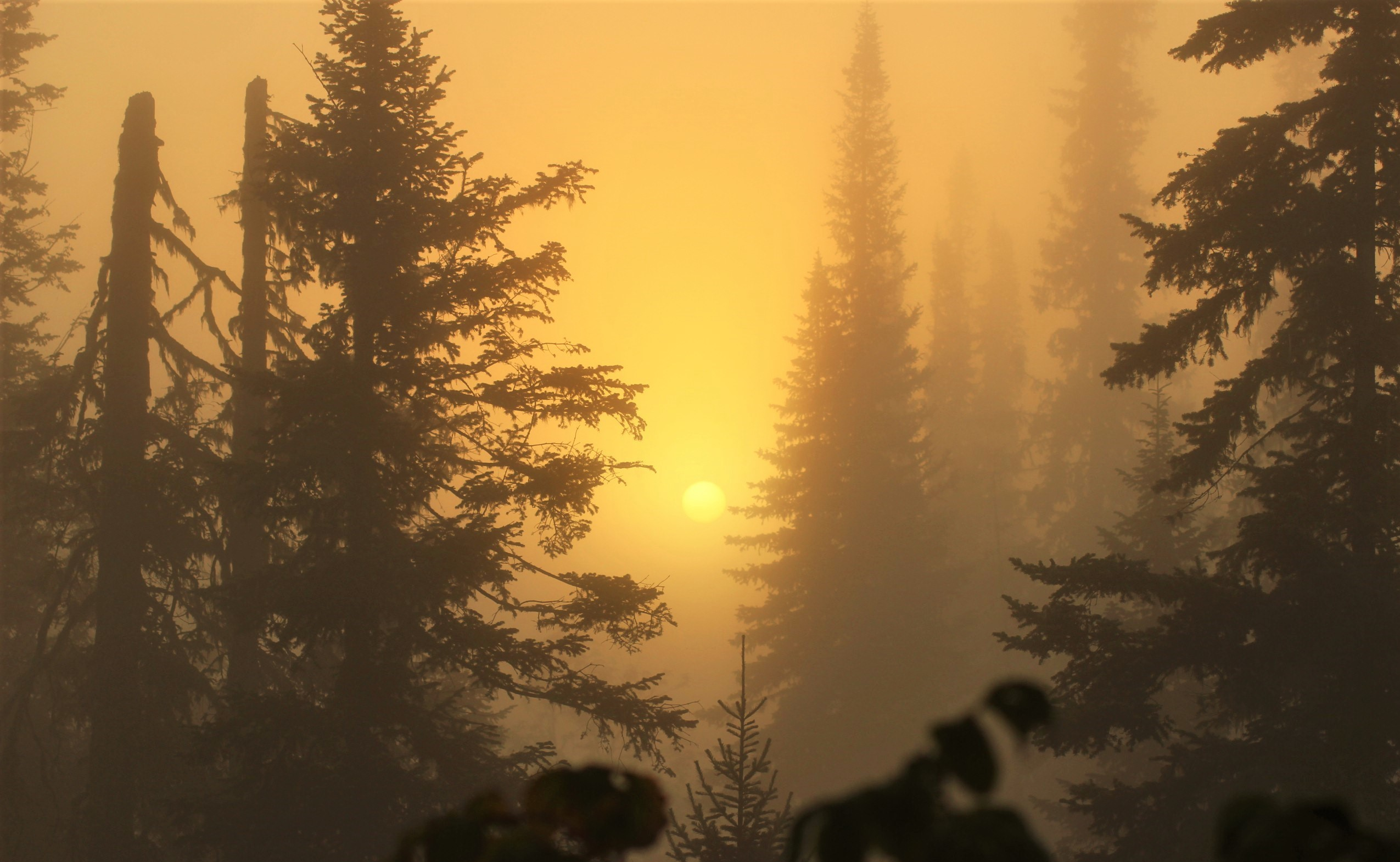 В густой пелене тумана