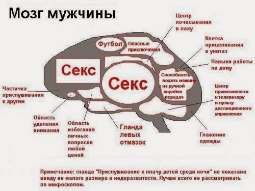 Откритки. С Международным днем мужчин. Мозг мужчины