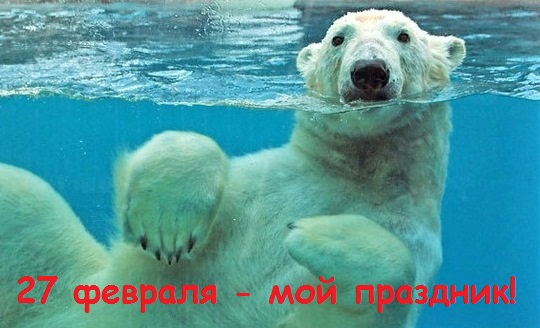 Международный день полярного медведя. Приглашаю поплавать!