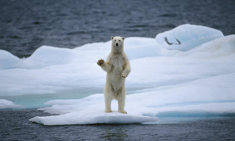 Открытки Всемирный день дикой природы. Белый медведь открытки фото рисунки картинки поздравления