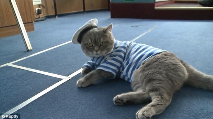 Шотландский кот Боцман — подмастерье Матроса.