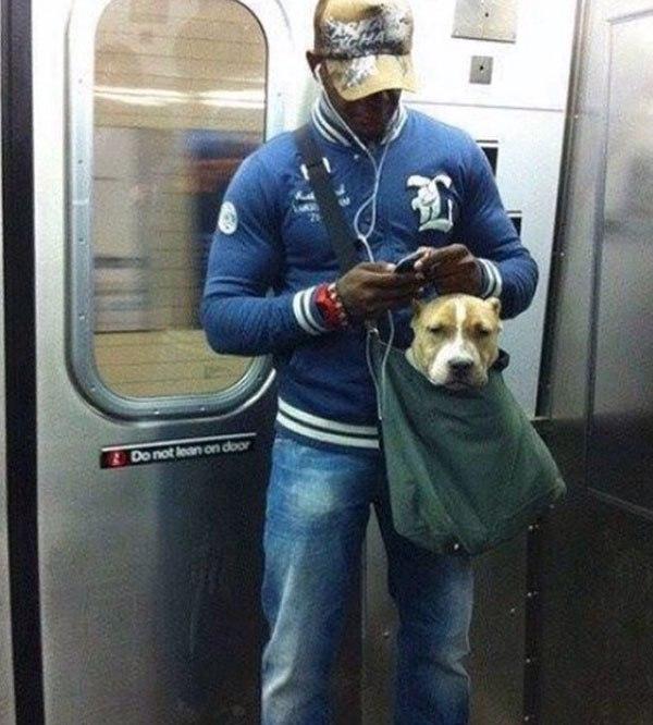У вас, кстати, есть собака? Возите ее куда-нибудь?