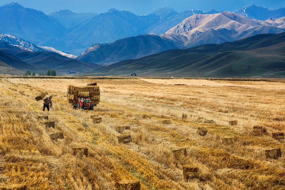 22. Пастух. (Фото Jie Zhao):