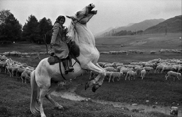 С раннего возраста цыгане знакомятся с лошадью и помогают взрослым пасти стада. СССР, Сибирь, село О