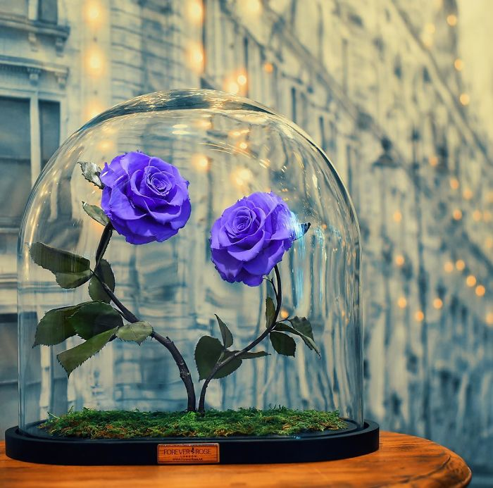 Розы будут жить в течение 3-х лет. Красота!!!!!!!!!!