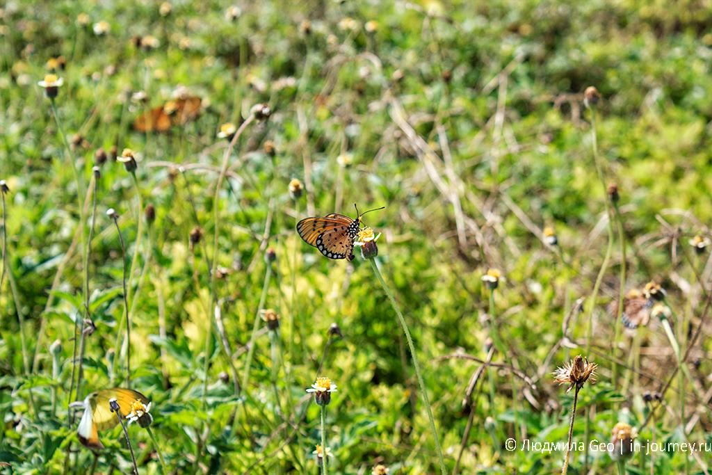 бабочки в таиланде