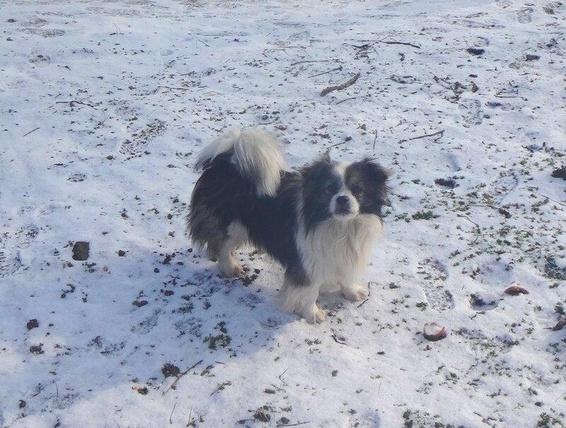 Собака в январе, год 2018 (1).JPG