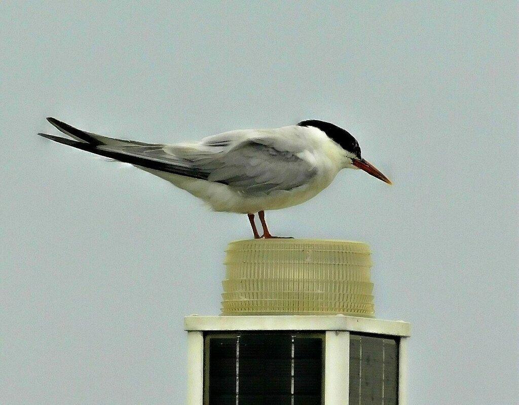 Птицы у острова Эллис