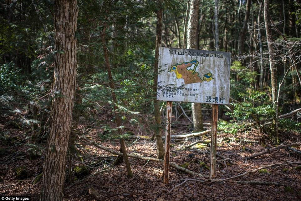 Жесть лес люди Япония