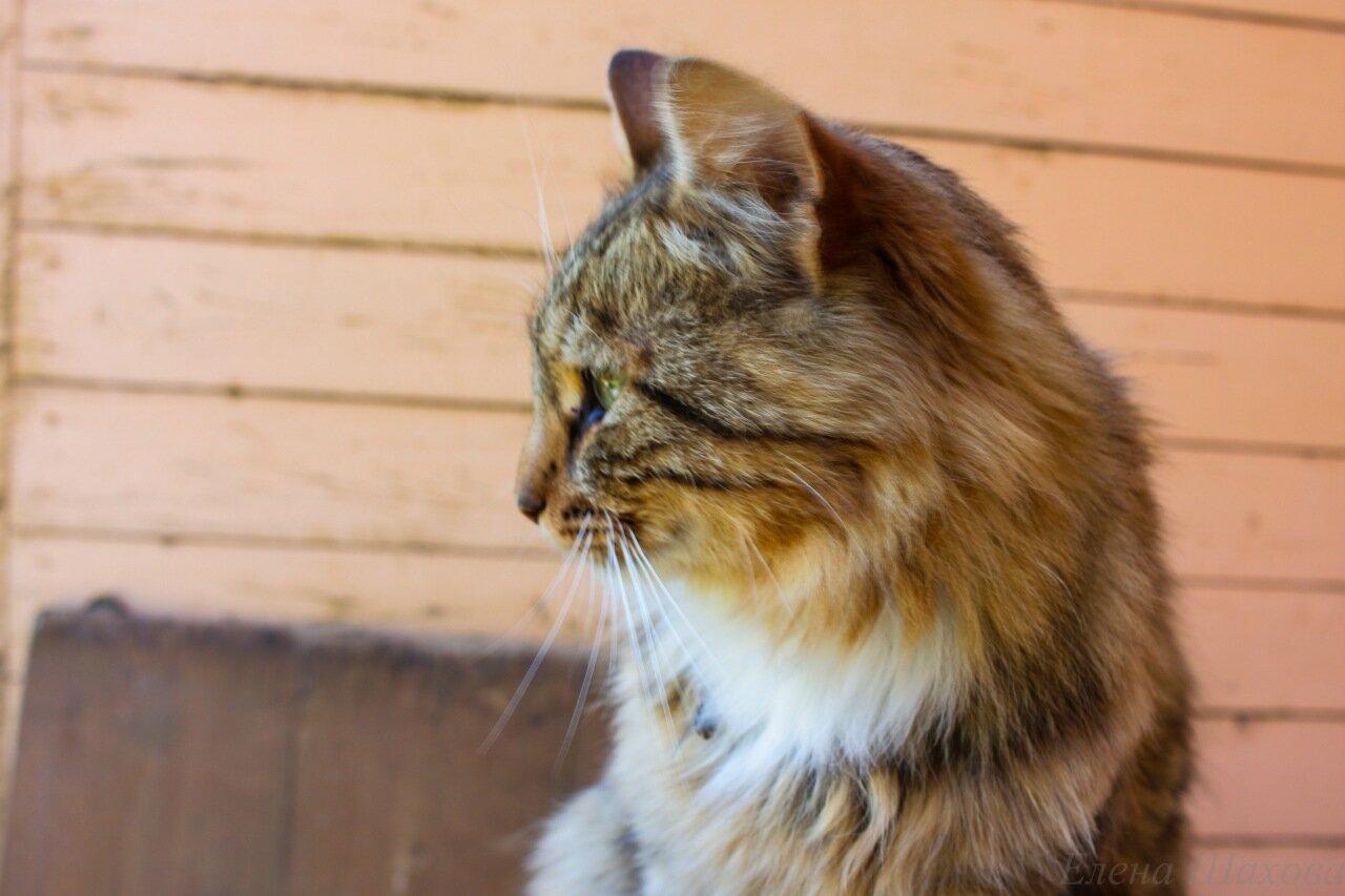 Кошка-5.jpg
