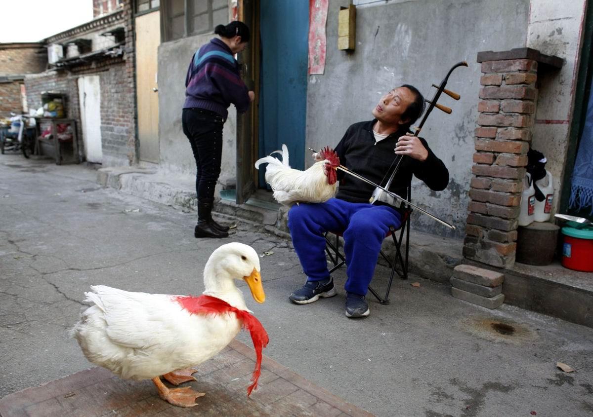А мне для счастья так немного надо: Китайский дворовый музыкант и философ