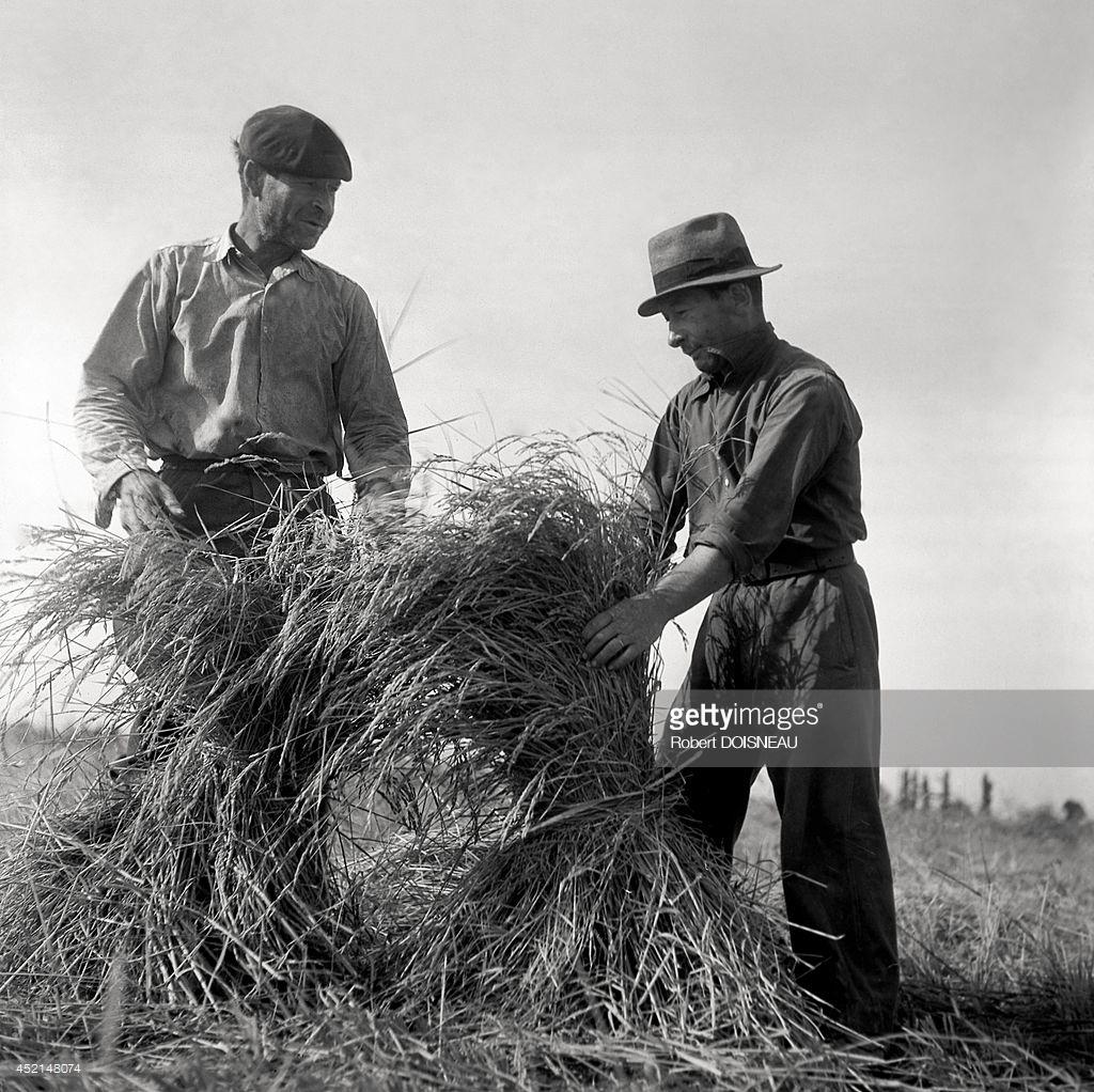 1947. Камарг (региональный природный парк). Фермеры