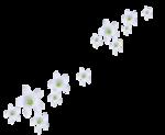 «Magic of Flowers» 0_7c4b8_3fd49af1_S
