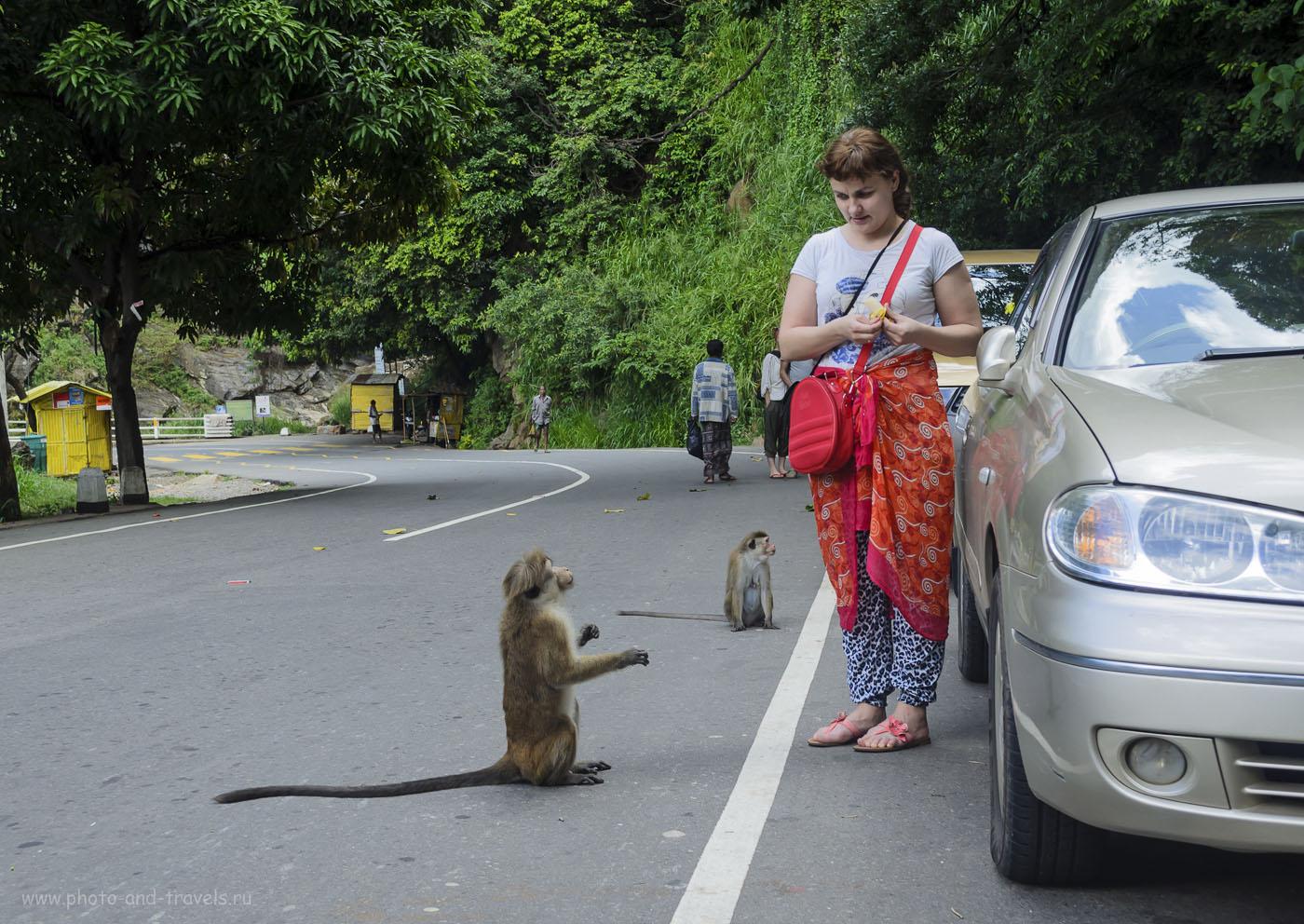 29. Фото. Во время тура по Шри-Ланке остановились у водопада Rawana Falls. На белых людей сбежались посмотреть все местные жители... (100, 29, 6.3, 1/60)