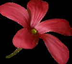jsn_studioNDC_round2_am_flower1.png