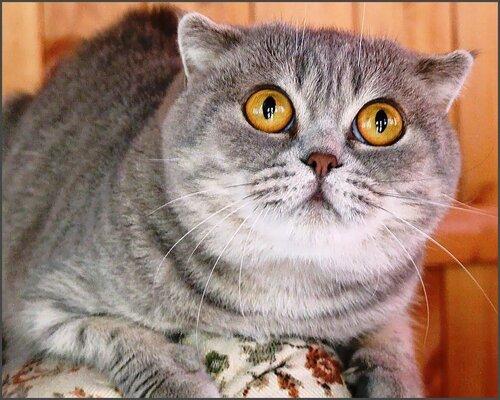 Кошачье настроение 3