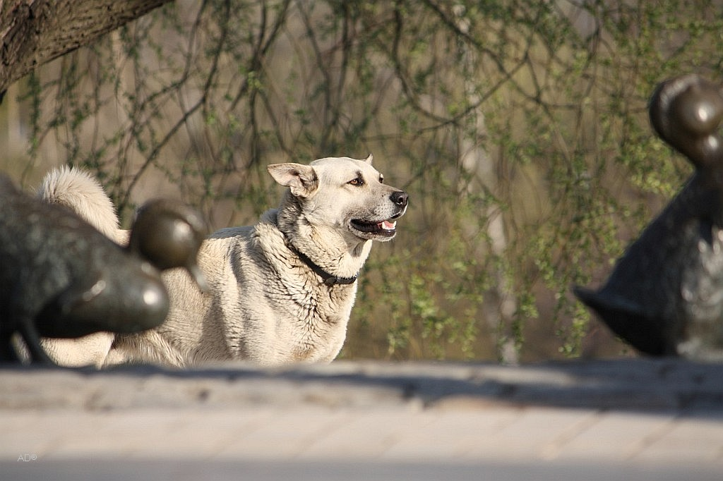 собачьи нежности или dog love-story