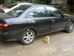 wheel_cats.jpeg