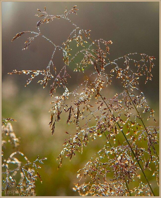 Хрустальные травинки