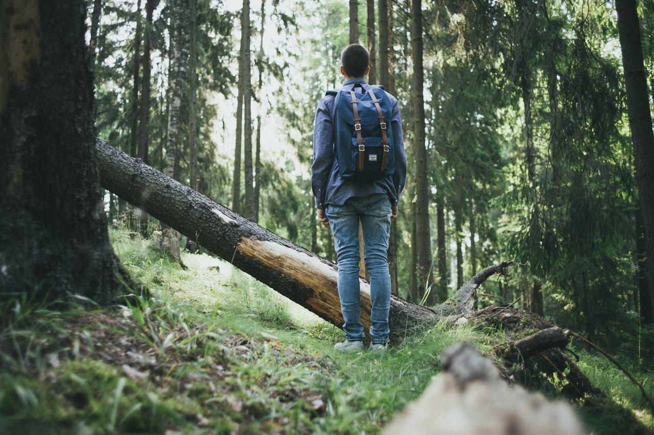 человек среди деревьев