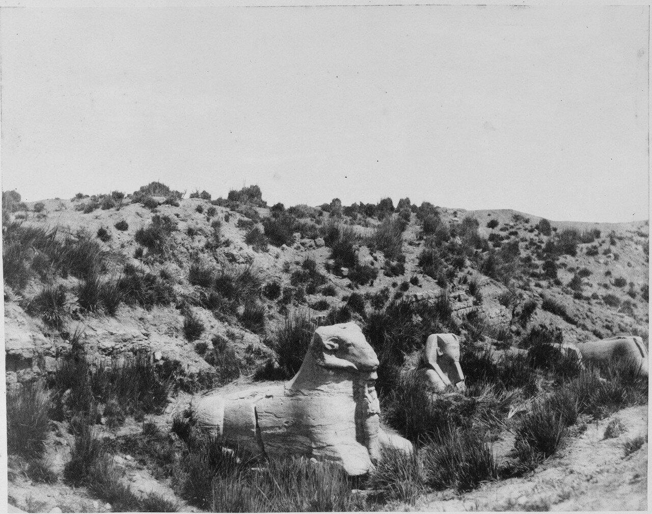 Карнак (Фивы). Сфинксы с головами барана и человека. 1858