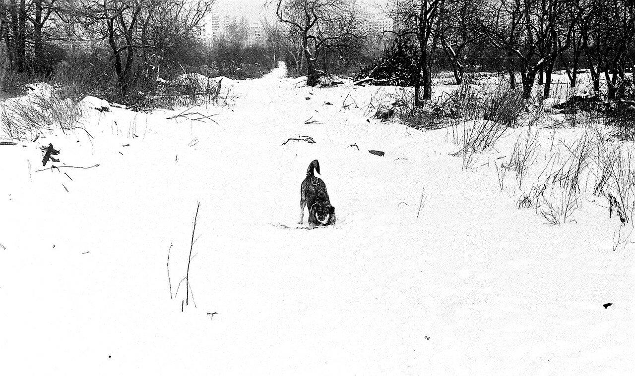 1981. Вид одного из переулков села Коломенского. Длинная узкая улочка с остатками приусадебных садов.