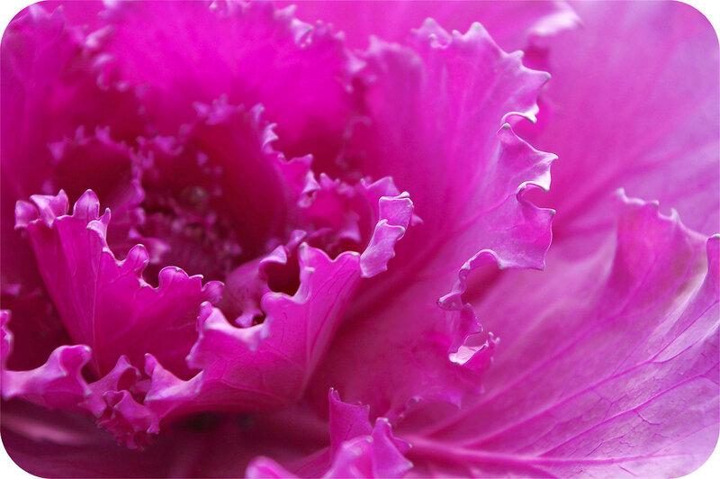 Розовое кружево