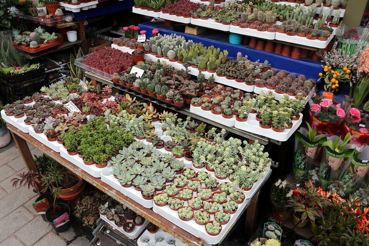Стамбул. Птичий (цветочный) рынок на площади Ени Джами