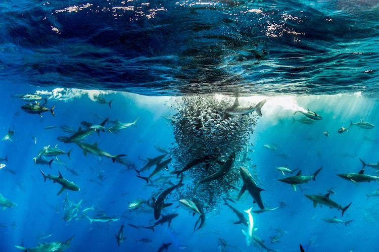 Гран-при фотоконкурса BigPicture Natural World Photography Competition. Национальное хранилище Natio