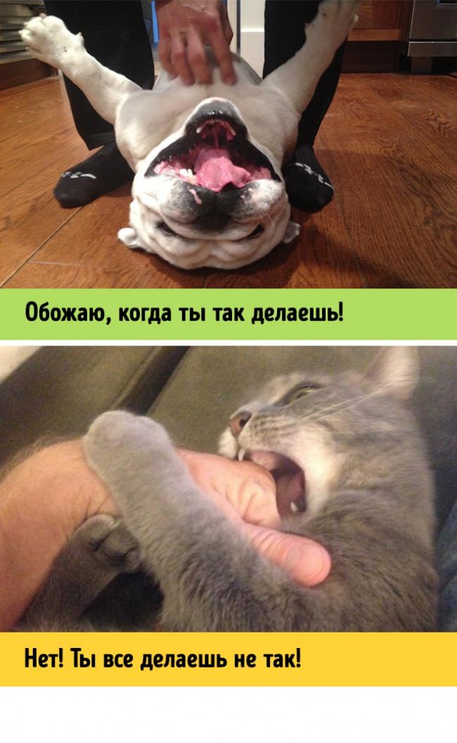 Как спят вместе схозяином