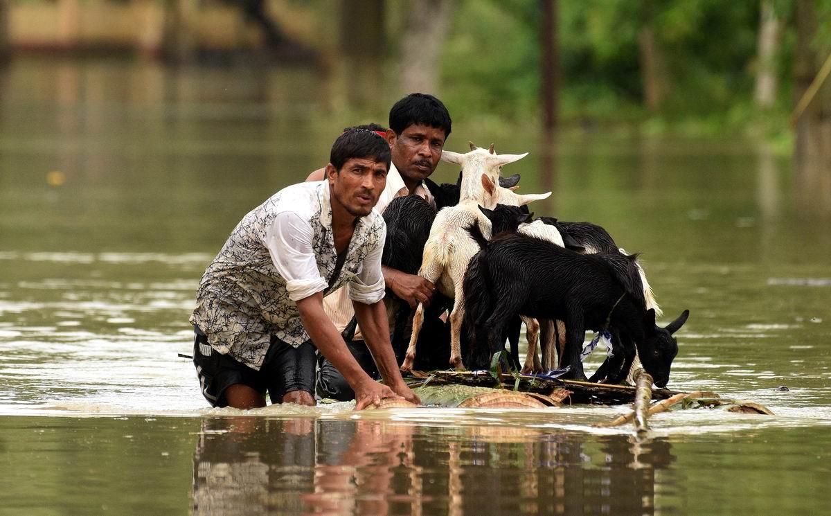 Спасение козликов из водной стихии: Индийские деды Мазаи