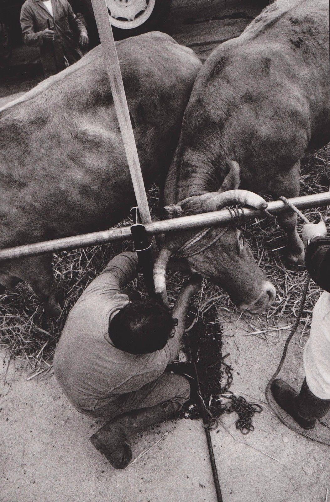 1991. Сен-Бенуа