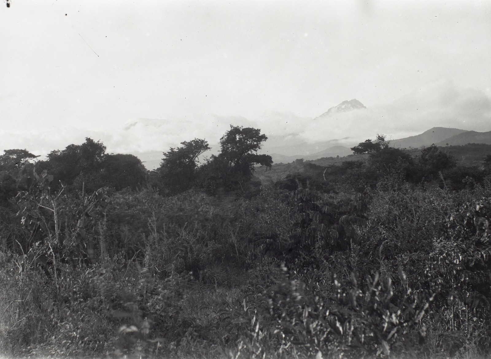 13. Килиманджаро. Поле чагги