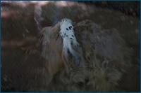 http://img-fotki.yandex.ru/get/3702/15842935.19f/0_d7f65_2012d370_orig.jpg