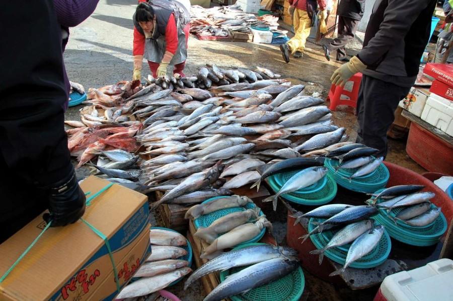 5. Рыба и моллюски Рыба и моллюски могут стать источниками развития тяжелых заболеваний. К примеру,