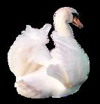 ScrapCD_Magnolia-sm_Swan.png