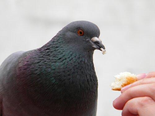Кормим птичку